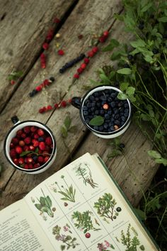 We Are Herbalist Berry Picking, Into The Woods, Slow Living, Cottage Chic, Farm Life, Fresh Fruit, Countryside, Herbalism, Food Photography
