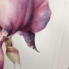 ________________________________________________________#watercolor#watercolorist#artist#watercolour#watercolorpainting#aquarelle#aquarella#акварель#рисуюкаждыйдень#instaart#realizm#watercolorillustration#instaart#instaartist#watercolorplanet#instadraw#paint#draw#acuarelle#acuarela#fineart#instaart#instaartist#watercolorplanet#instadraw#paint#draw#acuarelle#acuarela#botanicalillustration#botany#botanicalart#flower#flowering#watercolorvideo#iris