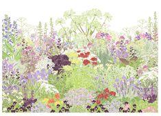 Hannah McVicar & Introducing the Planting Plan Library Herb Farm, Planting Plan, Plant Drawing, Farm Gardens, Medicinal Herbs, Calendula, Botanical Art, Garden Plants, Herb Garden