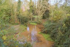 Ashwell Springs. These are a lovely feature of Ashwell Village, a nice place to walk and 'splash'; and the spiring is one of the sources of hte river Cam which flows thorugh Cambridge.