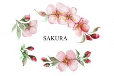 Watercolor Cherry blossom branch by IvanFet on @creativemarket