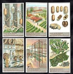 Silk-Worms-Lifecycle-Cards-Set-Liebig-1938-Insect-Moth-Silkworms-Soie-Farming
