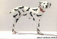 if only my dalmatian looked like this!