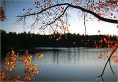 Walden Pond. My refuge.