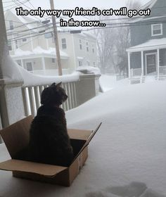 The Only Way My Friend's Cat Will Go Out In The Snow