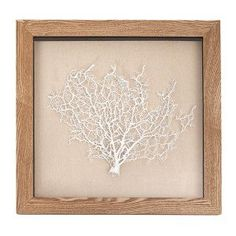White Coral in Natural Frame