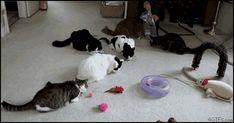 Spookable kitties .gif