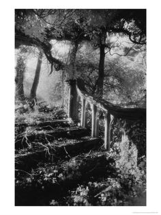 Broken Steps, Charleville Forest, County Offaly, Ireland Giclee Print by Simon Marsden at Art.com