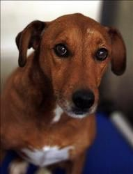 Lucky is an adoptable Hound Dog in Lexington, KY. Hello! My name is Lucky and I am a 6 year old(as of 6-8-13) Hound/Terrier mix! I am a really awesome boy who just wants to have fun! I haven't been ve...