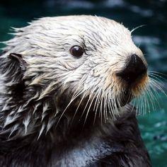 Otters make me happy!