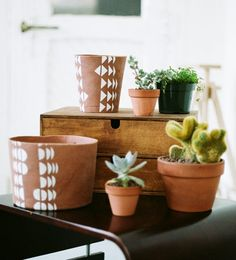 now that i have a plant i need to paint it's pot!