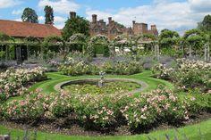 british rose garden - Google претрага