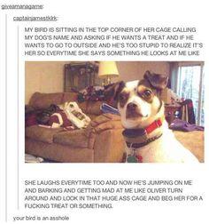 This idiot dog.