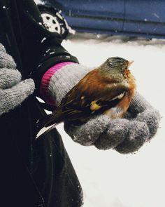 Bir kuş konsa badi parmağıma...