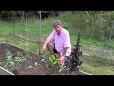 HOW TO PLANT AND GROW CABBAGE IN A NO-DIG BED Mark Abbott-Compton in Cornwall