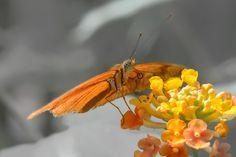 Photograph tximeleta by gorka orexa on 500px