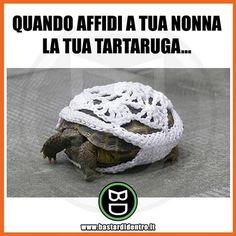 La #nonna sì che sa prendersi cura della tua #tartaruga... Seguici su youtube/bastardidentro #bastardidentro www.bastardidentro.it