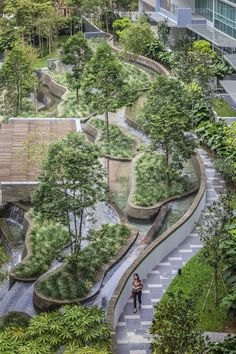 Дорожка зелень деревья ступеньки