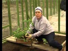 Почетный садовод Климцева Луиза Ниловна рассказывает как выбрать время пересадки…