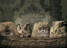 Cute owl and kitties!