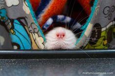 les aventures de marty mouse souris qui est en fait un rat 2