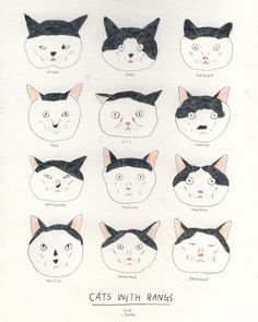 Cats with bangs. #projectcatnerd (Please let me know if the names are wrong.) by theplanetsun