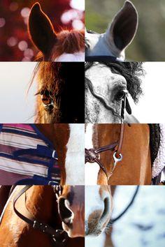 C'est tellement magnifique! Je crois que c'est un petit message ... Je crois que ça signifie que chaque cheval est différent, mais aussi magnifique et talentueux les autres que les autres ! Et vous, que cela signifie t'il pour vous?