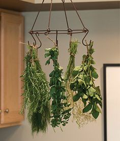 Burpee Herb & Flower Drying Rack Kit $14.95  / large -- Comes with 5 hooks for drying, as well as twine for tying herbs and flowers. Complete instructions included.
