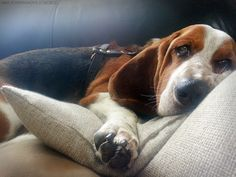 """ingloriousbassets:  """"The holidays are here? Ohhhhhh…"""""""