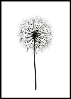 Kleines Poster mit toller Schwarz-Weiß-Fotografie eines Löwenzahns auf weißem Hintergrund. Tolles Motiv, das sich ausgezeichnet mit anderen botanischen Postern in einer Postercollage kombinieren lässt. www.desenio.de