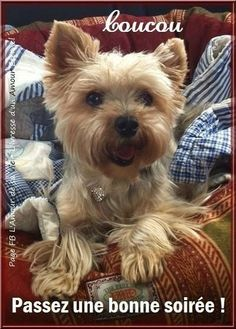 Terrier, Images, Amour Éternel, Dogs, Animals, Passion, Google, Funny Cats And Dogs, Bonjour