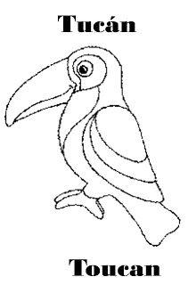 Animales de la Selva para dibujar: Tucán. Toucan.