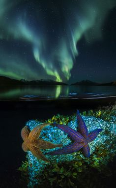 Starfish feeding under the glow of the Aurora Borealis Fast Crazy Nature Deals. Beautiful Sky, Beautiful World, Beautiful Pictures, Mother Earth, Mother Nature, Two Worlds, International Photography Awards, Natural Phenomena, Sea Creatures