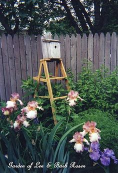 Birdhouse Ladder with iris (Garden of Len & Barb Rosen) click for garden tour
