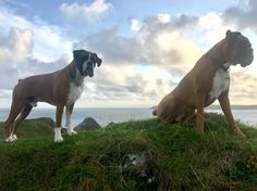The boys above Three Cliffs 23 August