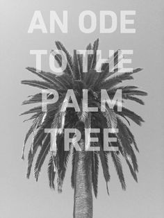 We're making an ode to the palm tree on our blog with killer palm-styles! http://blog.swell.com/Slice-of-Life-0525