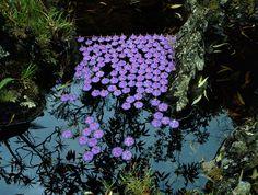 Land Art - German Artist and Naturalist Nils Udo's ephemeral creation. Richard Long, Land Art, Ikebana, Art Environnemental, Art Et Nature, Ephemeral Art, Organic Art, Environmental Art, Installation Art