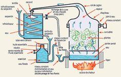 Esquema da destilação de óleos essenciais.