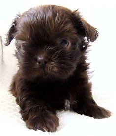 Puppy precious