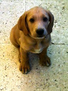 Perro, dog, cachorro, puppy, animales, animals