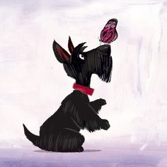 Scottie and Butterfly