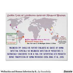 Eliminate Dengue has placed Rio and Niteroi over 1,000 km south. Wonder why? http://www.eliminatedengue.com/project  #Wolbachia #Culex #ZIKV #Zika #WolbachiaRisks #sterilizingmen #CI #crimeagainsthumanity #depopulation #vaccine #bacteria #genome
