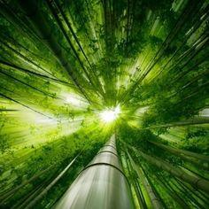 좋은 아침입니다.    쭈욱 뻣는 대나무 숲에  쫘악 내리 비추는 빛의 모습이  청량함을 주고 있네요.    오늘도   상쾌함이 가득한 날로  멋지게 살았으면 좋겠네요.^^