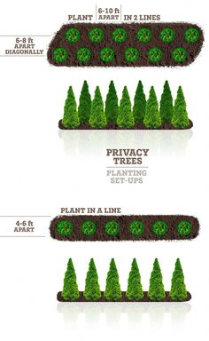 Need privacy trees to help block out your neighbor? Our privacy trees are the perfect solution! Pick and order your fresh privacy trees online today for FAST delivery! Privacy Plants, Privacy Landscaping, Home Landscaping, Front Yard Landscaping, Arborvitae Landscaping, Farmhouse Landscaping, Landscaping With Trees, Privacy Fences, Landscaping Around House