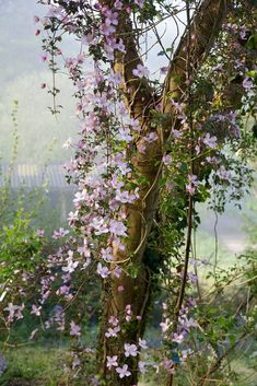 Clematis Montana er en smuk begynder-klematis - Lilly is Love Beautiful Gardens, Beautiful Flowers, Raindrops And Roses, Interior Garden, Garden Photos, My Secret Garden, Dream Garden, Garden Inspiration, Bonsai