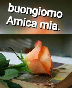 Italian Memes, Italian Quotes, Corazones Gif, Italian Life, New Years Eve Party, Good Mood, Good Morning, Ale, Emoticon