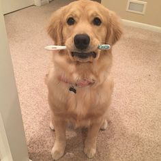 I don't know what you're taking about....I didn't steal a toothbrush!! Lacy ♥