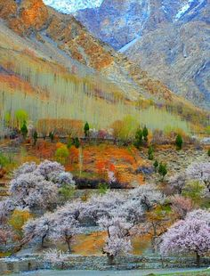Awesome view of beautiful Chalt valley fantastic photography of Nangar Hunza valley Gilgit Baltistan Pakistan Photography Pics, Nature Photography, Beautiful World, Beautiful Places, Trees Beautiful, Pakistan Travel, Pakistan Zindabad, Hunza Valley, Gilgit Baltistan