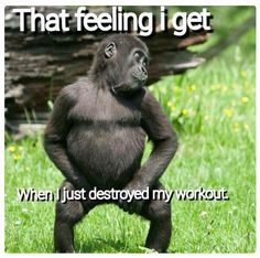 15 Most Funny Fitness Memes to Give You A LOL Break My feeling when I destroyed. 15 Most Funny Fitness Memes to Give You A LOL Break My feeling when I destroyed my workouts. Humour Fitness, Gym Humour, Workout Humor, Gym Workouts, Memes Humor, Funny Humour, Humor Quotes, Funny Workout Quotes, Funny Fitness Memes