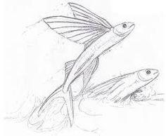 flying fish drawing - Pesquisa Google